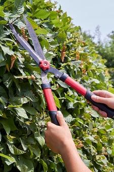 Coup vertical de jeunes mains avec une cisaille de jardin taillant le buisson. homme de race blanche coupant des feuilles de jardin en gros plan.