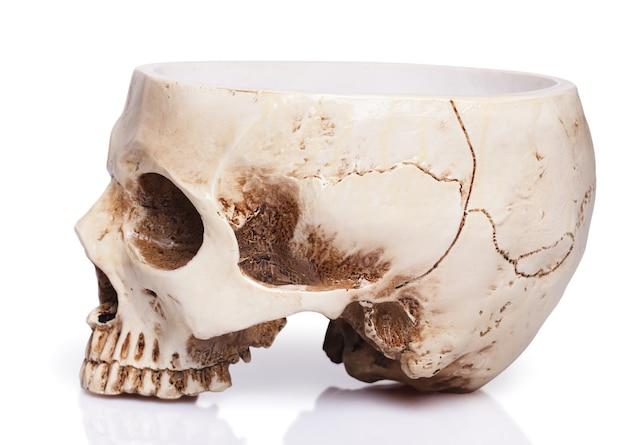 Coupe d'un crâne humain isolé sur blanc