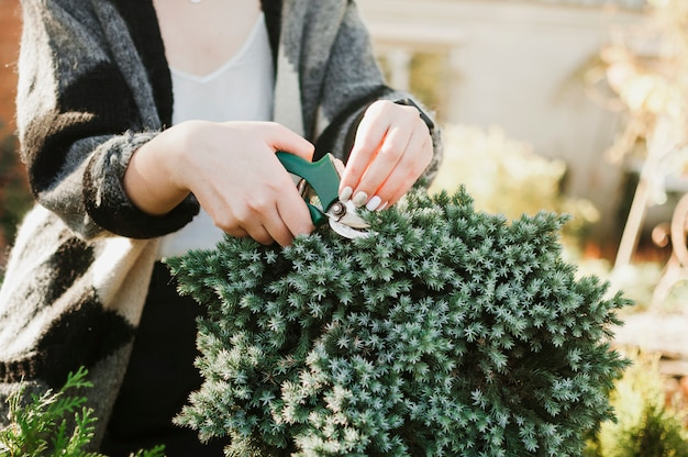Coupe des plantes