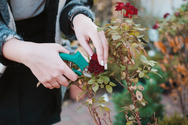 Coupe des roses