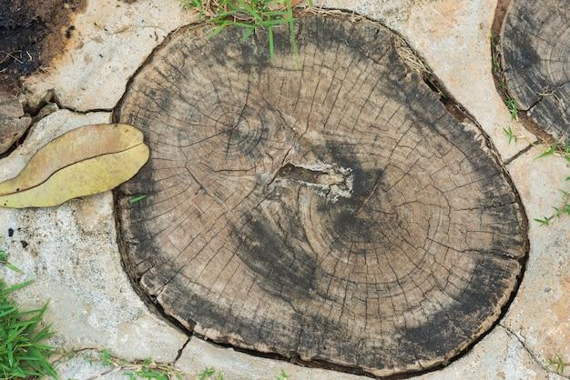 Coupe transversale d'un tronc d'arbre montrant des anneaux de croissance sur fond de plancher.