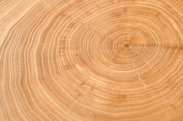 Coupe transversale d'un tronc d'orme montrant des cernes de croissance.