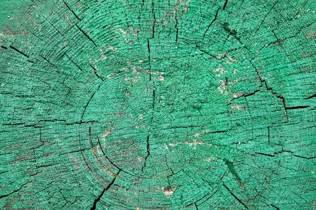 Coupe d'un vieil arbre peint à la peinture verte.