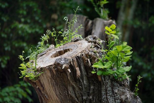 Couper un arbre dans un parc naturel. beau paysage vert