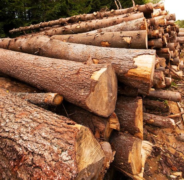Couper et empiler de jeunes arbres, pas de grands arbres