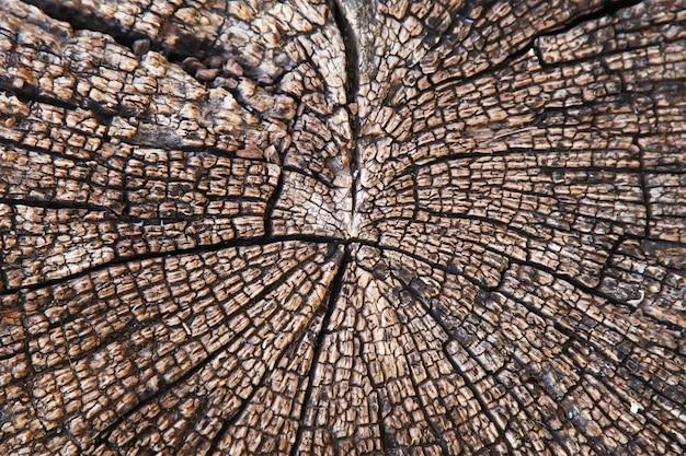 Couper la texture du bois