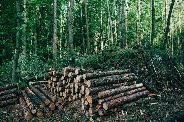 Couper les troncs d'arbres se trouvent dans les bois