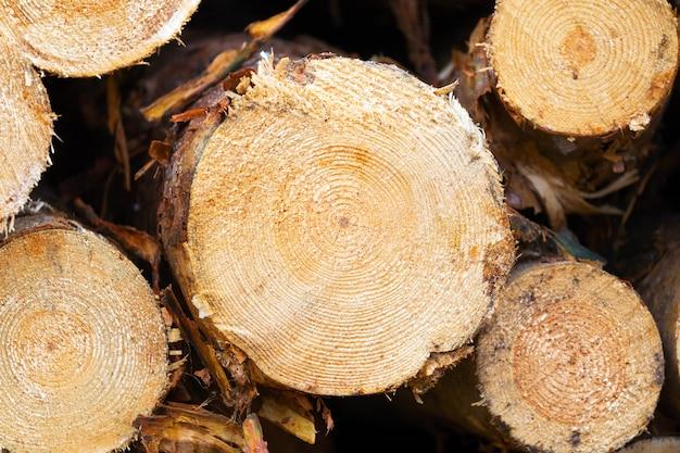 Coupes de scie en bois enregistrées dans la forêt pour l'industrie du bois