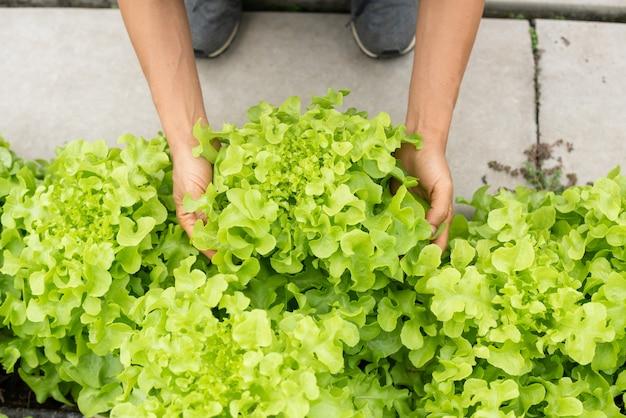 Couple adulte senior cueillette de légume dans le jardin