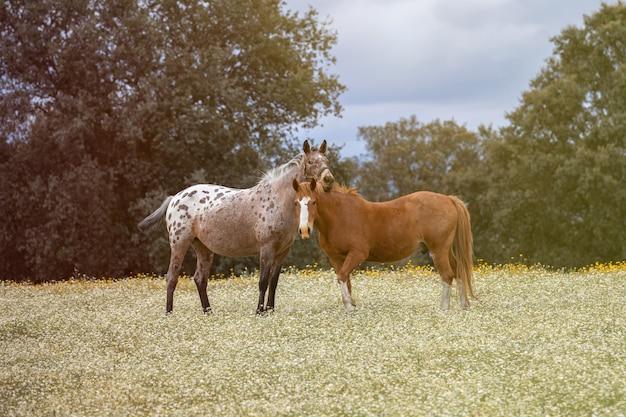 Couple de chevaux dans une journée ensoleillée