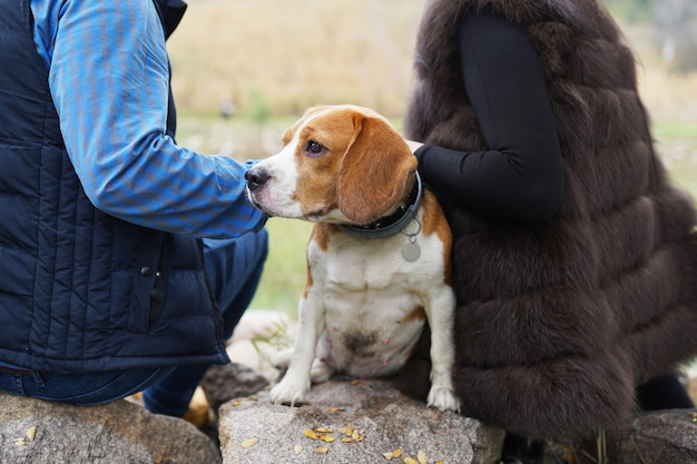 Couple avec chien beagle assis dans le parc