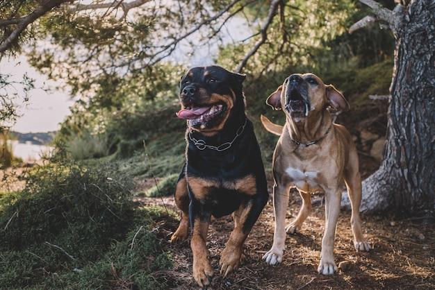 Couple de chiens de chasse aux beaux jours