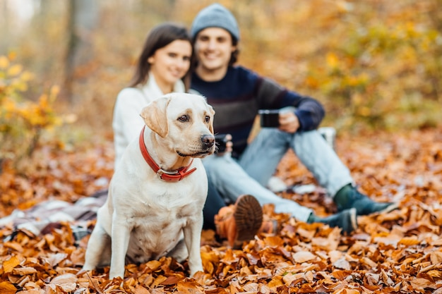 Couple et golden retriever labrador dans le parc, est assis sur une couverture