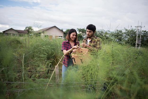 Couple de jeunes agriculteurs récoltent des asperges fraîches avec la main ensemble mis dans le panier.