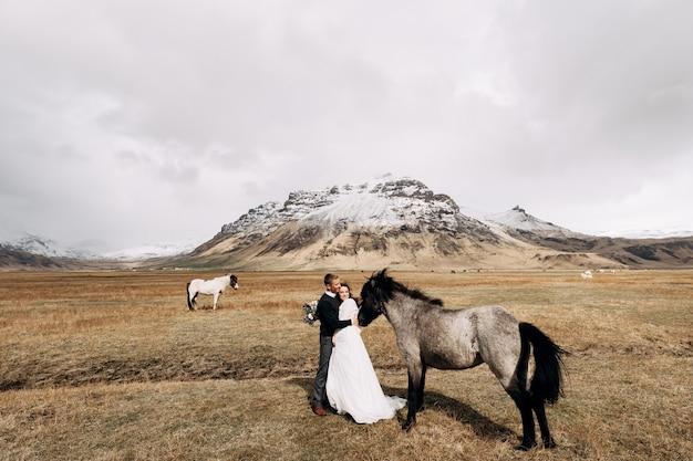 Couple de mariage après avec des chevaux, le marié embrasse la photo de mariage de destination de l'islande