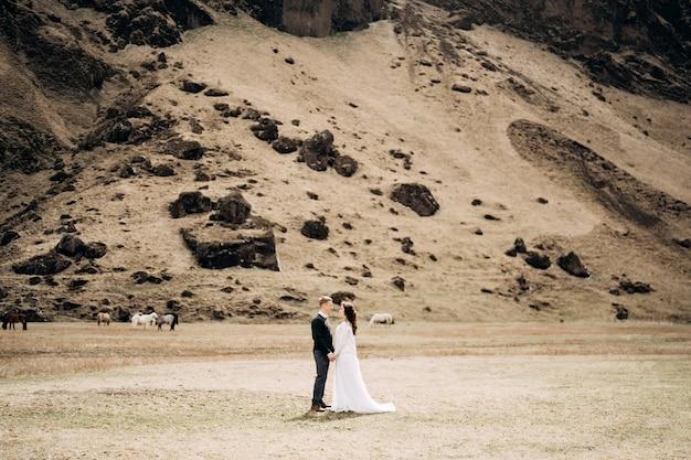 Couple de mariage sur le fond d'une montagne rocheuse et de chevaux de pâturage en islande que le marié détient