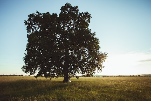 Couple de mariage sous le chêne au coucher du soleil