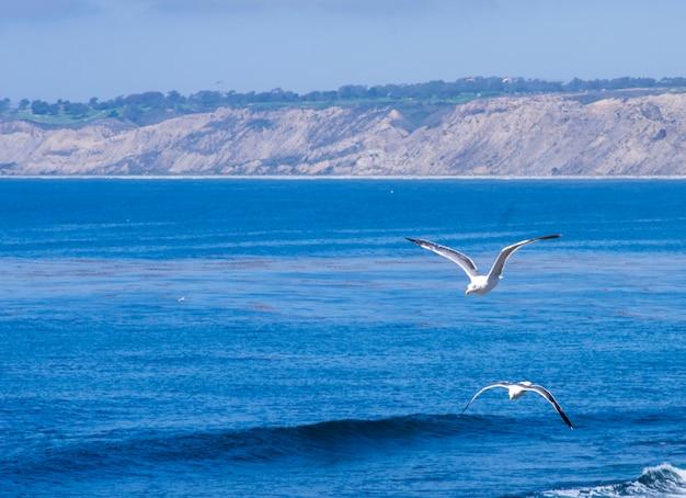 Couple de mouettes volant au-dessus de l'océan