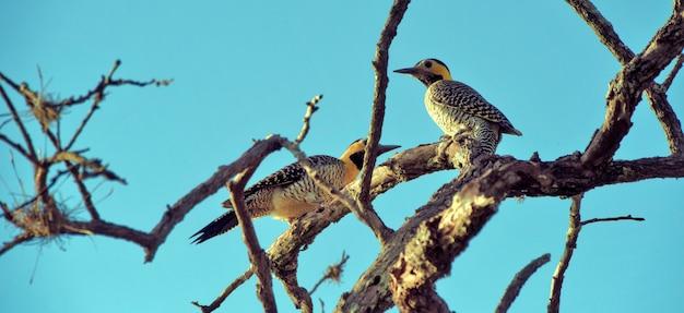Couple d'oiseaux campo scintillement