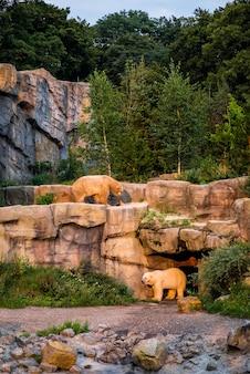 Couple d'ours blancs sauvages dans une forêt
