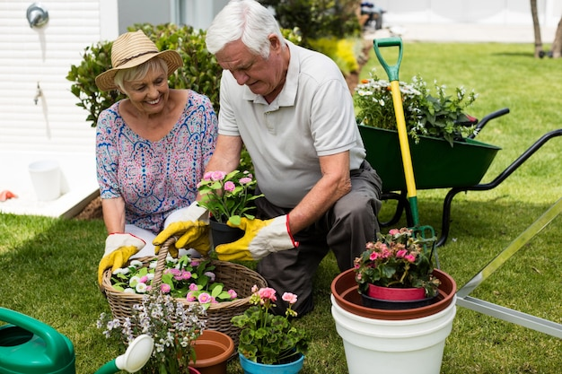 Couple de personnes âgées jardinage ensemble dans la cour