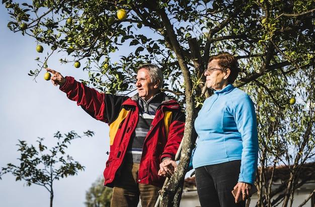 Couple de personnes âgées se tenant la main sous un arbre