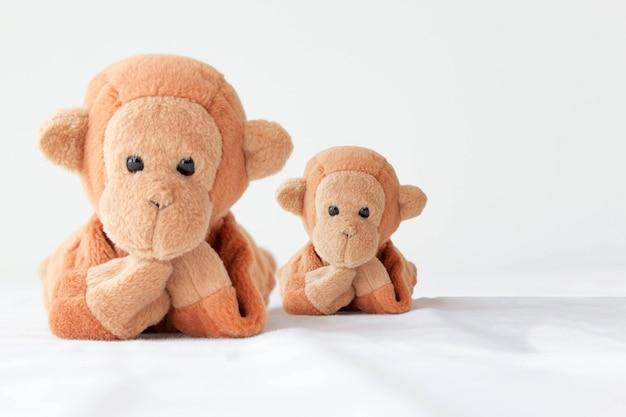 Un couple de singes mignons, mère et fils prennent une photo pour bonne mémoire.