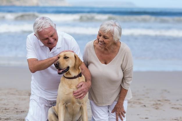 Couples aînés, jouer, à, leur, chien, plage