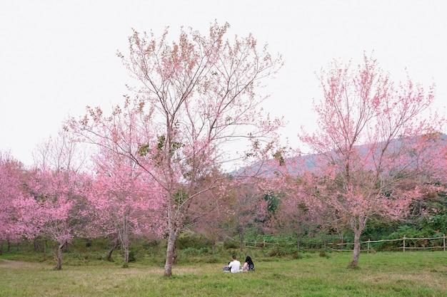 Couples dans le champ de fleurs roses de phu lom lo