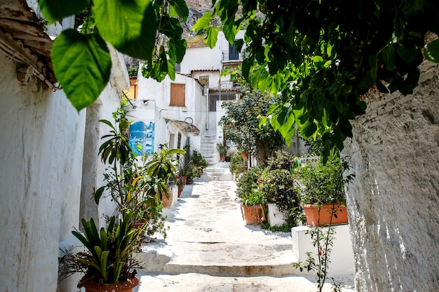 Cour grecque typique et traditionnelle, rue aux murs blancs et aux fleurs lumineuses