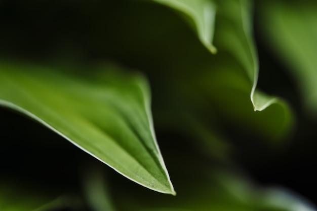 Des courbes gracieuses de gros plan de feuilles vertes.