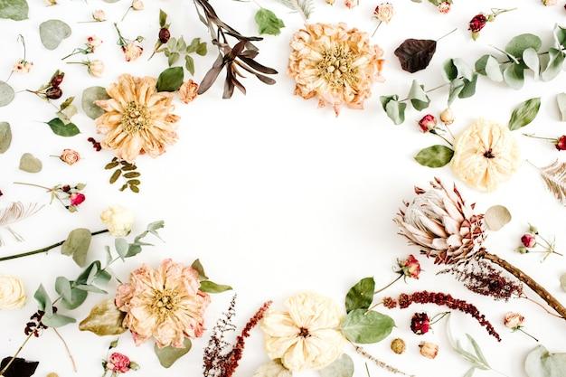 Couronne de cadre rond avec fleurs séchées : pivoine beige, protéa, branches d'eucalyptus, roses sur fond blanc. mise à plat, vue de dessus. fond floral