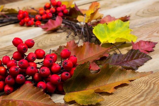 Couronne de thanksgiving avec des feuilles et des baies de rowan, gros plan