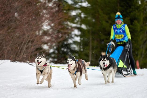 Courses de chiens de traîneau husky. compétition d'équipe de traîneau de sport canin d'hiver.