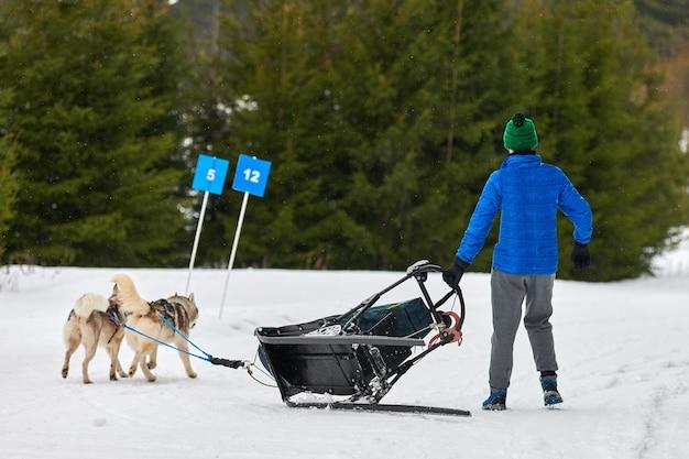 Courses de chiens de traîneau husky. musher tombe du traîneau. compétition d'équipe de traîneau de sport canin d'hiver