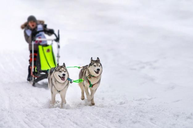 Courses de chiens de traîneau