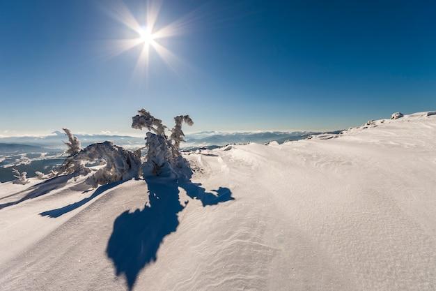 Couvert de neige courbé petit pin en montagne hivernale.