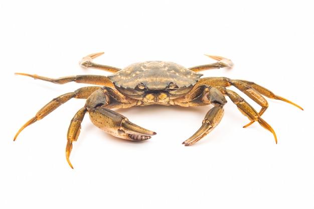 Crabe arthropode aux herbes de mer