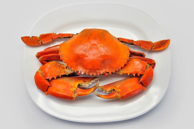 Crabe de boue géante dentelée en plaque blanche sur fond blanc