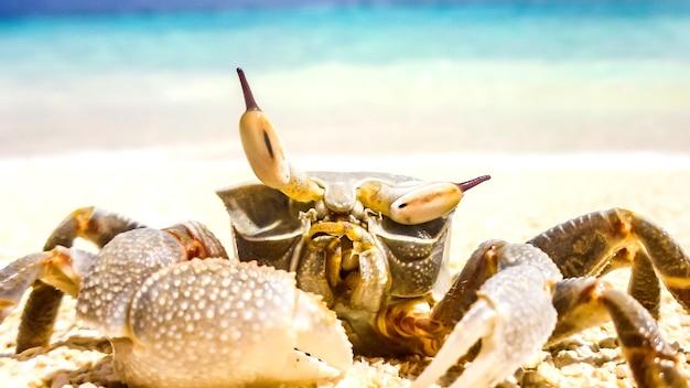 Crabe debout dans une station balnéaire aux maldives.