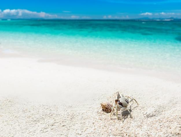 Crabe fantôme sur le sable de la plage