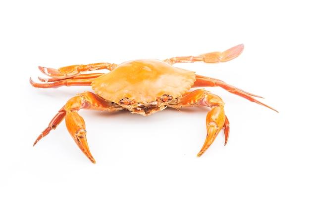 Crabe isolé sur fond blanc.