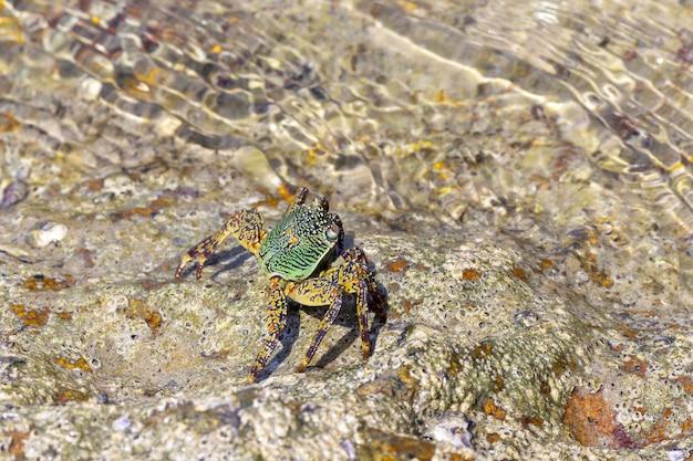 Crabe marchant dans le sable de l'eau