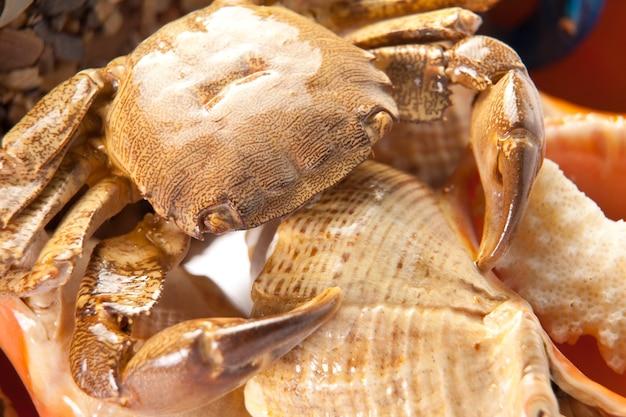 Crabe de mer sur coquille