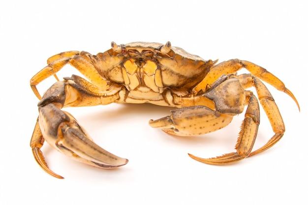 Crabe de mer isolé sur blanc