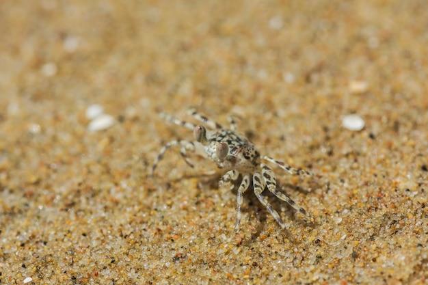 Crabe sur la plage