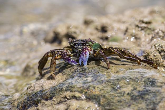Crabe rouge et vert sur rocher