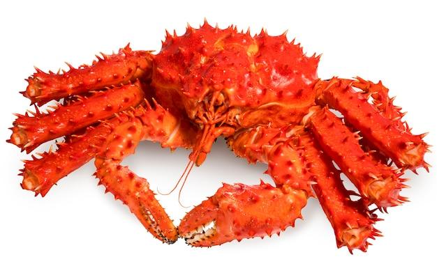 Le crabe royal d'alaska rouge isolé en fond blanc, le crabe royal de taraba norvégien sur blanc.