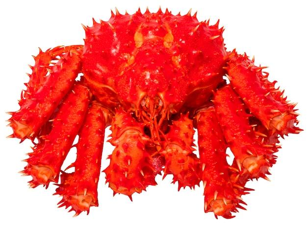 Crabe royal d'alaska rouge isolé sur fond blanc.