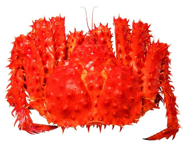 Crabe royal de norvège sur blanc, pattes de crabe royal d'alaska bio cuit sur blanc,